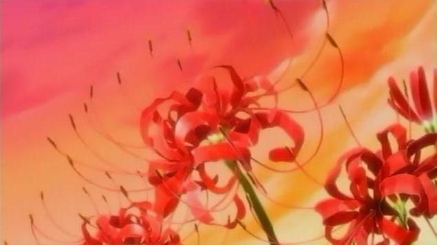 彼岸花,开彼岸,只见花,不见叶。《地狱少女·阎魔爱》 | 音体 ...