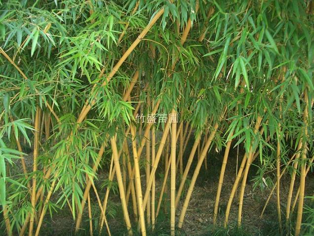 郑州哺f�yn�_五彩汇聚齐分享◆之中国竹〈贴图完毕〉